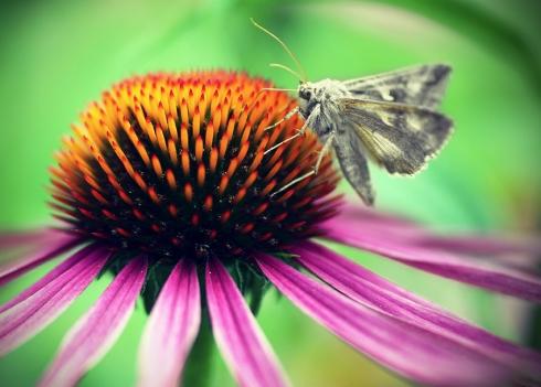 Schmetterling blume makro bonn botanischer garten