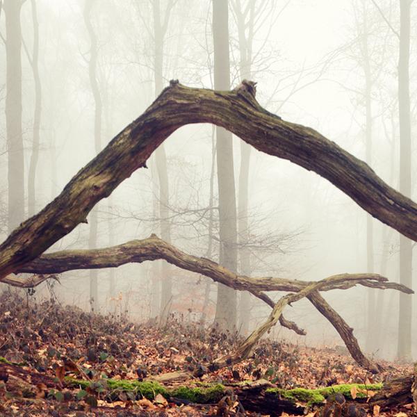 Fotografie: siebengebirge nebelwald