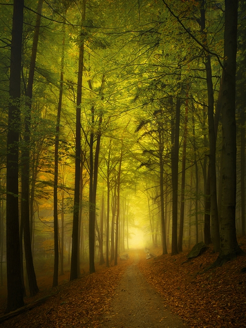 Weg ins Licht, Licht am Horizont, Nebel, Wald, Märchenhaft,