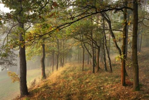 Wald (10)