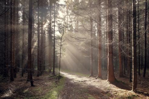 Wald (11)