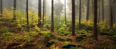 Wald (3)