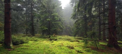 Wald (4)