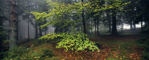 Wald (5)