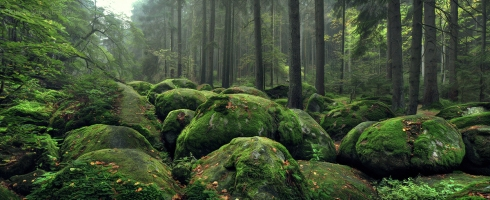 Wald (6)