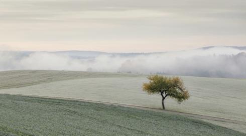 einzelner Baum Solitär Herbst nebel Reif