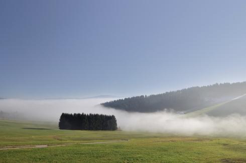 Forst Wirtschaftswald Nebel