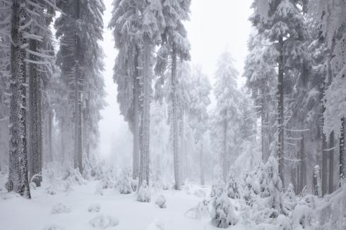 nebel eis reif wald winter 2