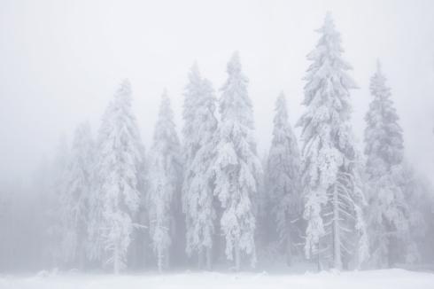 nebel eis reif wald winter 3