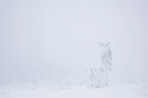 nebel eis reif wald winter 4