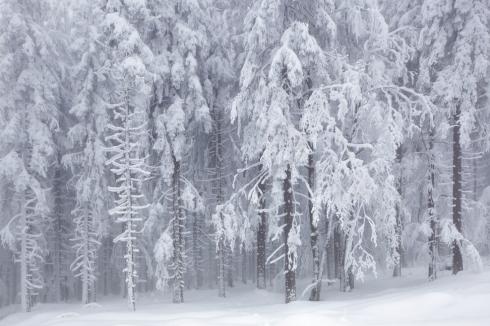 nebel eis reif wald winter