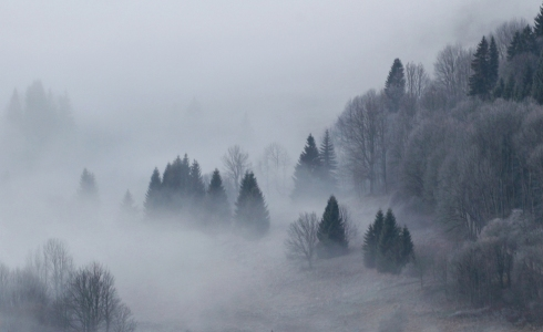 Wald Herbst Nebel Morgennebel