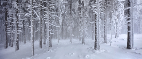 wald panorama winter reif eis märchenwald