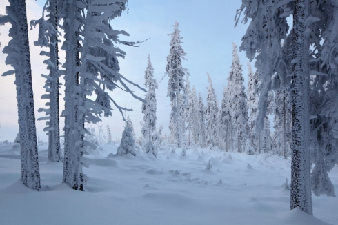 winterwald reif raureif eis schnee wald