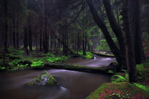 bach wildbach bayern natur urwald