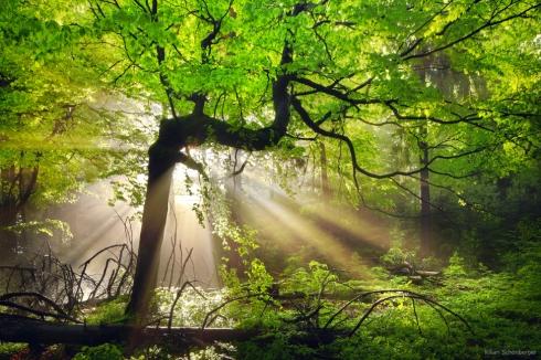 baum nebel sonne strahlen licht