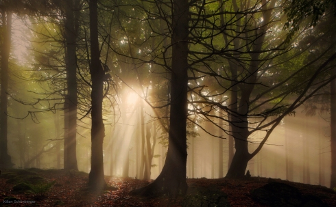 forest wood sunrays fog mist bayern wald nebel