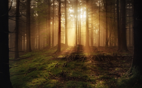 forest wood sunrays fog mist