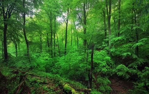 frühling spring green grün siebengebirge