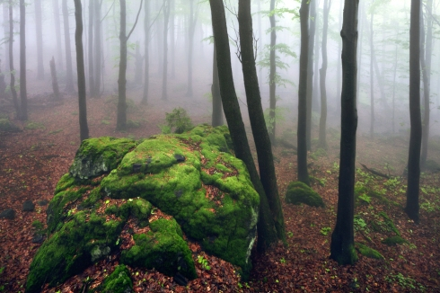nebel wald felsen moos deutschland bergwald