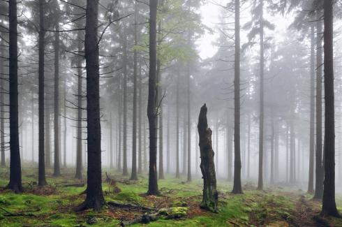 nebelstimmung wald bäume nebel bayerischer wald