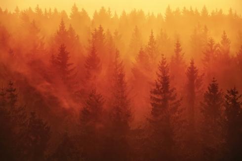 sonnenaufgang wald bayerischer wald nebel