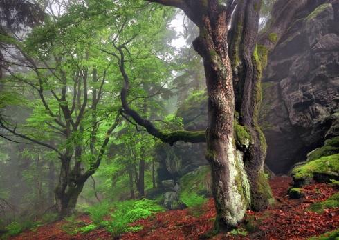 urwald naturwald buchen moos bayern