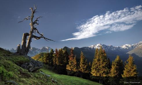 Alpen abgestorbener Baum Naturdenkmal