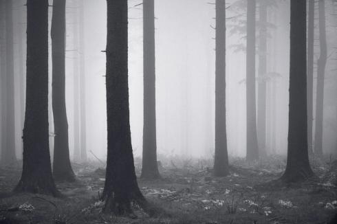 Wald Bäume parallel abstarkt