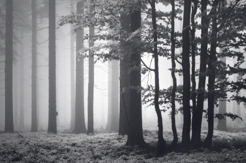 Wald Nebel Forst Märchen