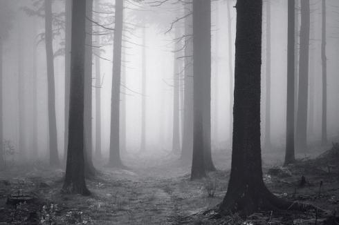 Wald Moos Fichten Nadelwald