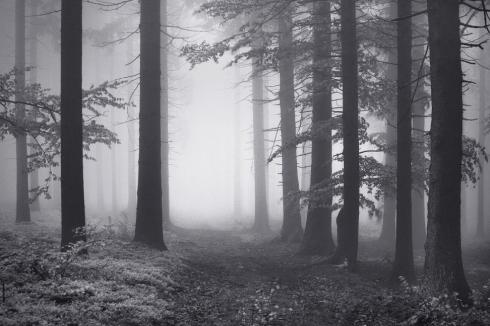 Wald Geheimnisvoll Herbst