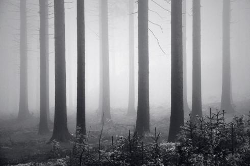 Schöner Wald Deutscher Wald