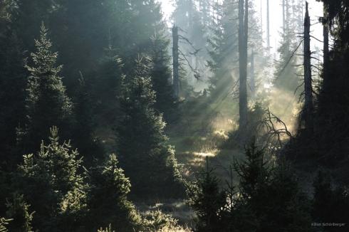 National Park Sumava Bayerischer Wald Waldsterben