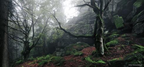 Naturwald Ostbayern (2)