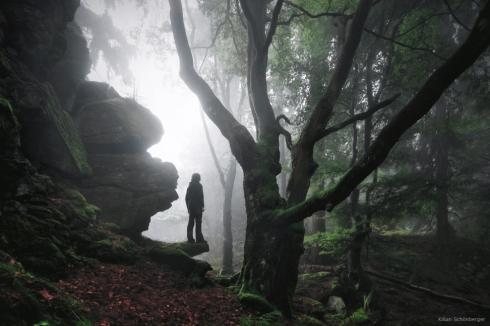 Naturwald Ostbayern (3)