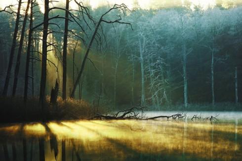 schönster Wald deutschlands