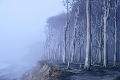 Gespensterwald Nienhagen Deutschland Ostsee