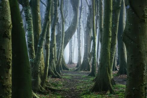 Waldpfad Waldweg Wandern Wald