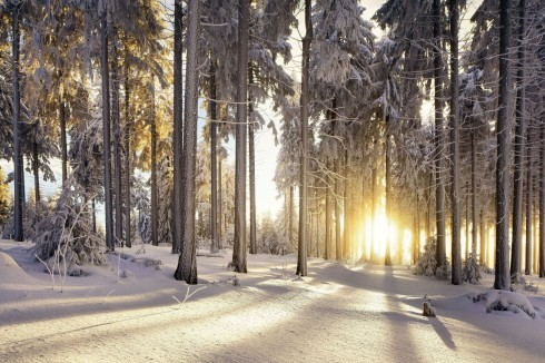Winter Thüringe Wald