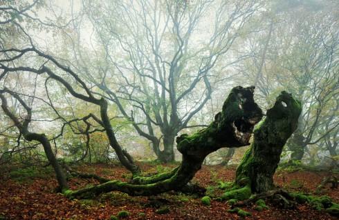 Wald Waldgeister Märchenwald