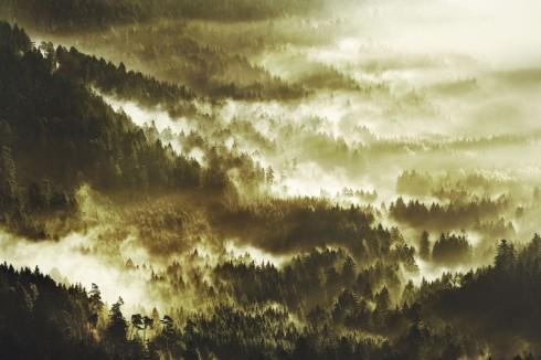 Wald geheimnisvoll Nebel