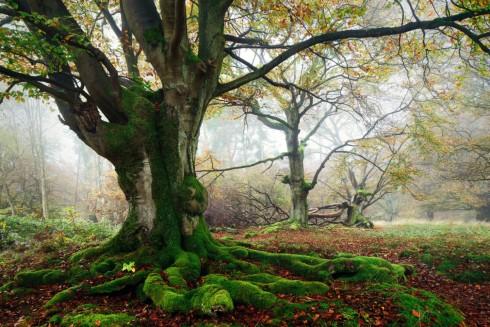 Schöne Alte Bäume