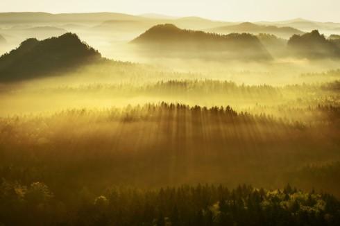 Sonnenstrahlen Wald Licht