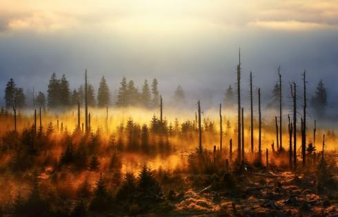 Bayerischer Wald Borkenkäfer Nationalpark