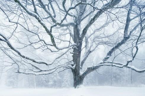 Baum im Winter Schnee