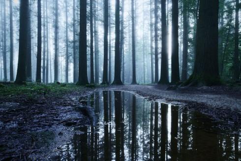 Bäume Spiegelung Nass Wald