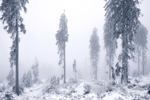 Bäume Winter Schnee Bayern Deutschland