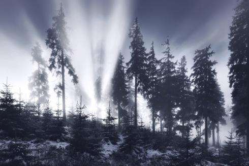 bayerischer wald winter licht