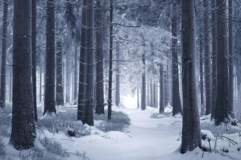 Waldweg pfad weg winter winterwald